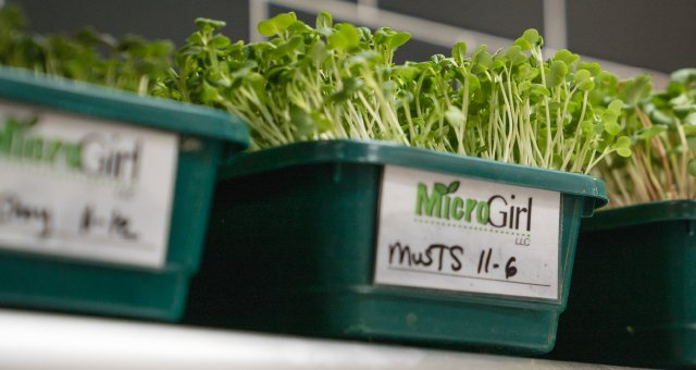 Microgreens used for dishes at Brazen Open Kitchen